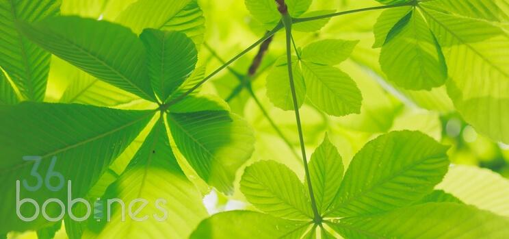 36 Bobines Eco Responsable